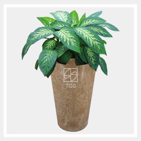 dieffenbachia 'tropic snow' in vase 28x49 taupe - Therapeutic Garden Sanctuary