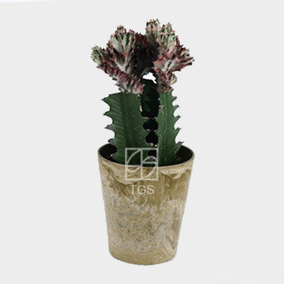 grafted cactus euphorbia lactea 3 in 1 in 12x13 pot Taupe - Therapeutic Garden Sanctuary