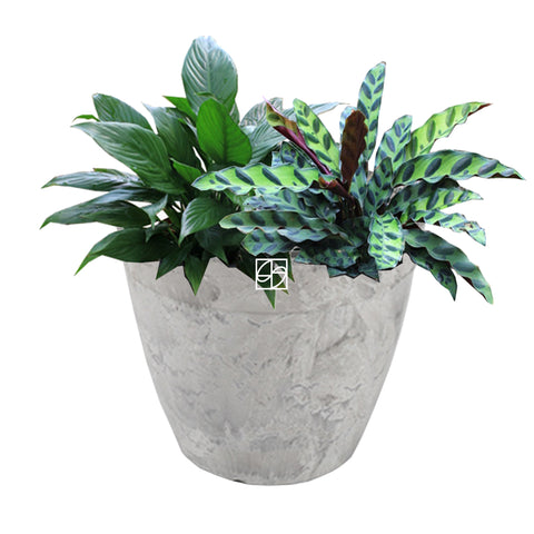 Spatiphyllum/Insignis in Ground 22x19cm Grey - Therapeutic Garden Sanctuary