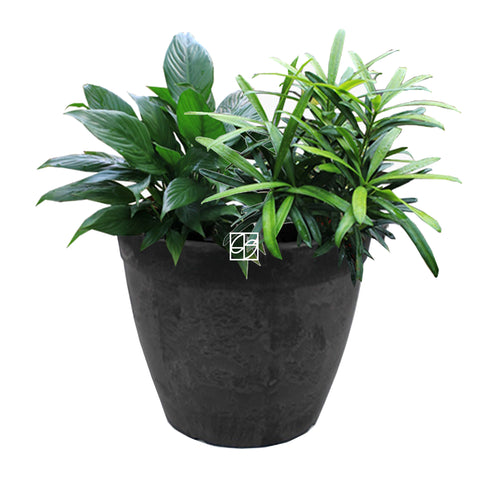 Spatiphyllum/Podocarpus in Ground 22x19cm Black - Therapeutic Garden Sanctuary