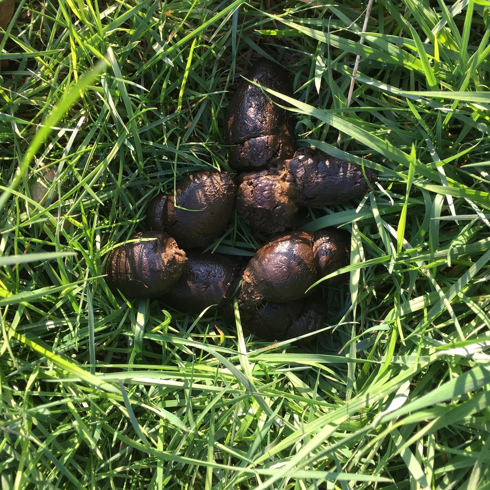 Want a Dog Poo you can Pick Up? Then read on...