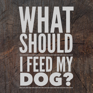 What Should I Feed My Dog? The 5 Most Important Things to Check on Your Dog's Food Label