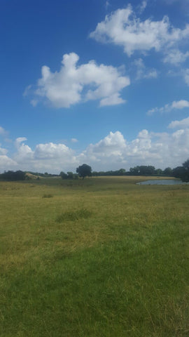 Zoo Grass Sky Clouds Sunny ZSL LondonZoo Whipsnade