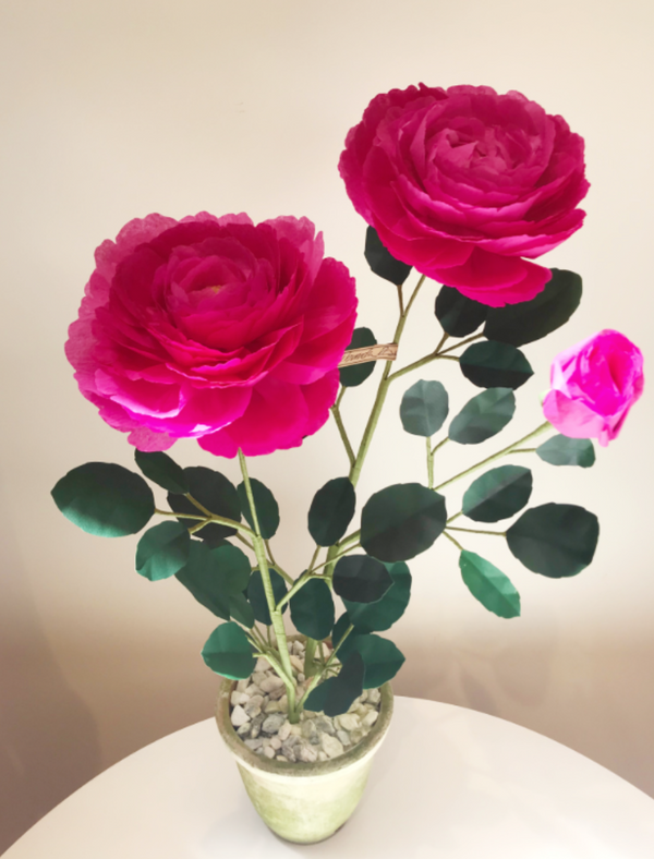 The Green Vase Floribunda Rose Plant - Bright Pink @ Hero Shop