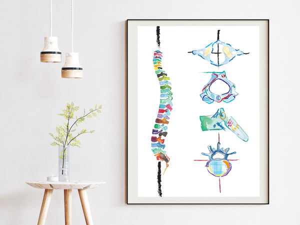 spine anatomy art