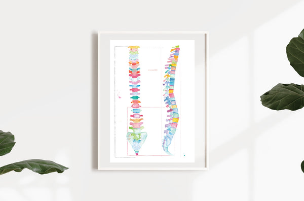 Spine Human Anatomy Chiropractic Artwork