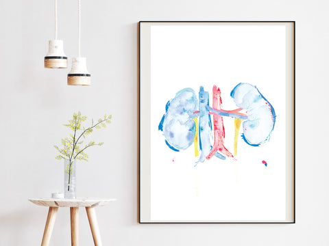 kidney anatomy art