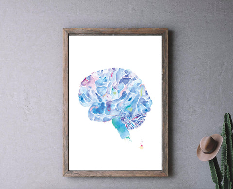 brain anatomy artwork