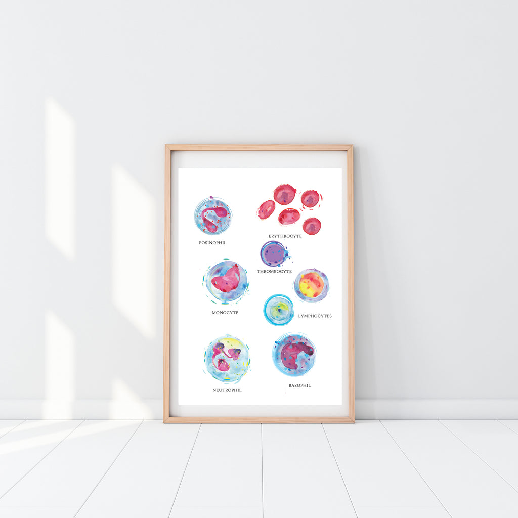 blood cell art print