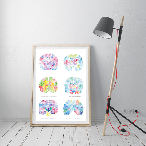neuroanatomy art