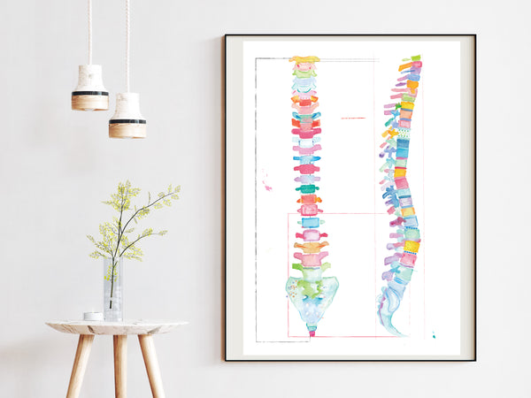 spine anatomy artwork