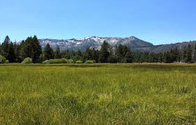 Washoe Meadows State Park - Interpretive Trail Signing