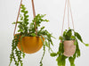 Capra Designs Hanging Plant pots with Leather Strap and clever drainage system. Available in Terrazzo.