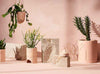 Range of Capra Plant pots, hand-made from Resin. Includes, Terrazzo hanging planter, Etch planter and Banjo planter