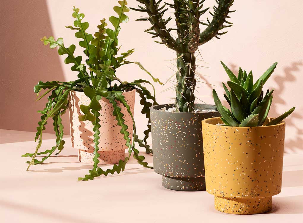 Capra Designs Banjo Planters - agave terrazzo  is made from resin. It comes with a tray. This great planter is designed so that it's signature plinth also forms the water tray. Worldwide shipping. Free UK shipping.