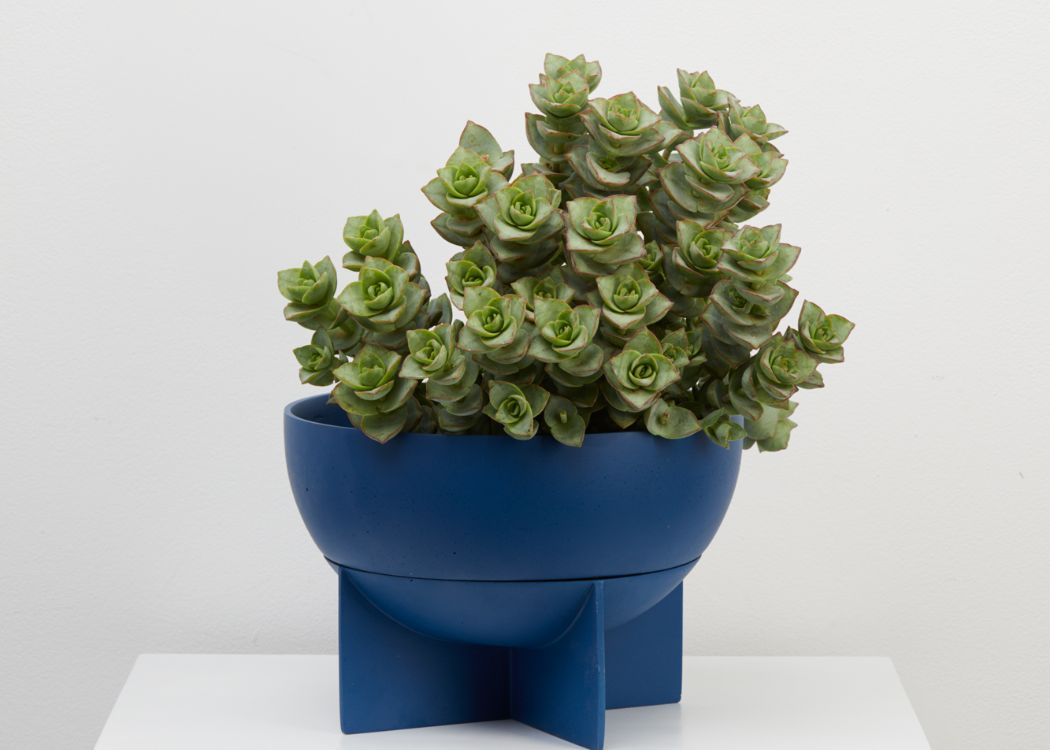 THE NEPTUNE DOME EROS PLANTER IS PERFECT FOR ARID PLANTS, LIKE A DRAPING RHIPSALIS OR A COLLECTION OF CACTI PLANTED IN IT. Its feature four-footed plinth is actually the drip tray. It comes with a  tray.We ship worldwide. Free UK shipping over £30.