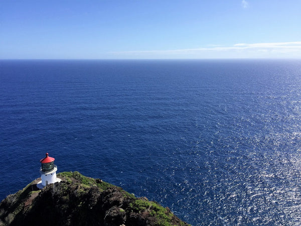 Lookout for New Life - Watch Whales from the Makapu'u Point Lighthouse!