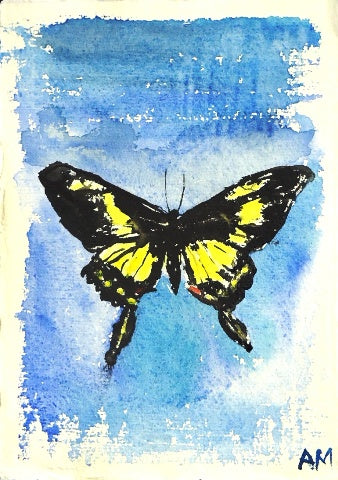 Watercolor painting of black and yellow swallowtail butterfly with blue background by Amanda Moseley