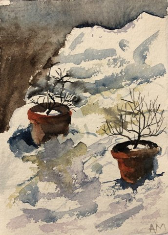 Amanda Moseley: Roses in the Snow