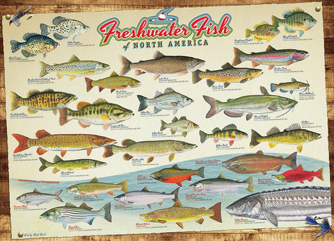 Fresh Water Fish of North America - 1000pc