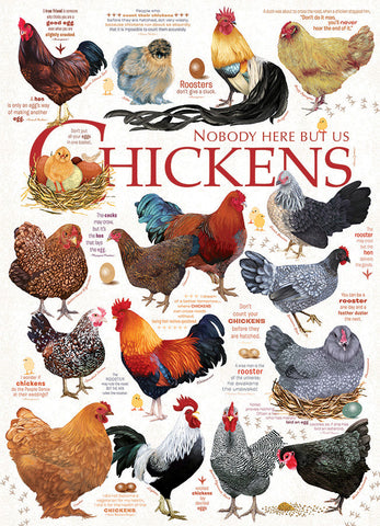 Chicken Quotes - 1000pc