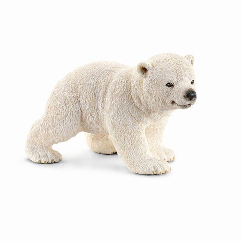 Polar bear cub, walking