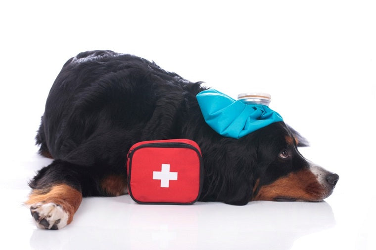 The Emotional First Aid Kit: What's in Yours?