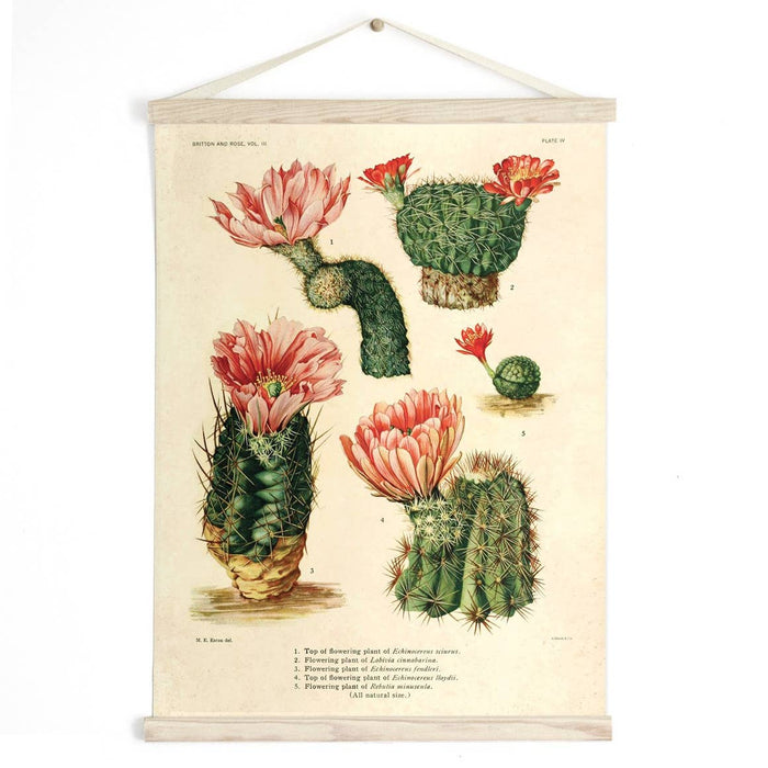 Curious Prints | Vintage Botanical Cactus Blossom Canvas Wall Hanging