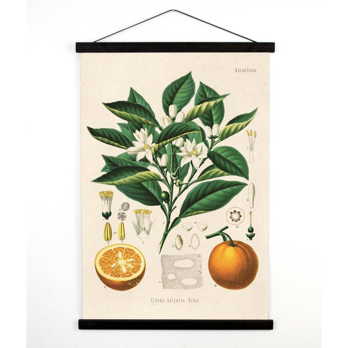 Curious Prints | Vintage Botanical Cactus Citrus Orange Canvas Wall Hanging