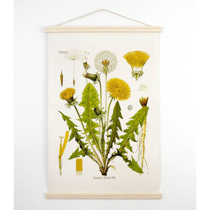 Curious Prints | Vintage Botanical Dandelion Canvas Wall Hanging