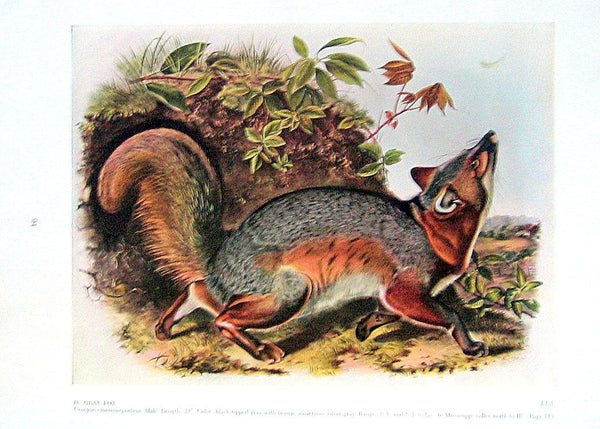Audubon Grey Fox Puzzle