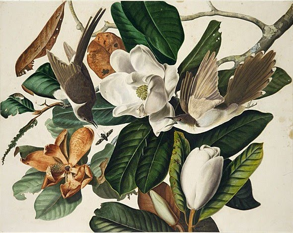 John James Audubon Note Card