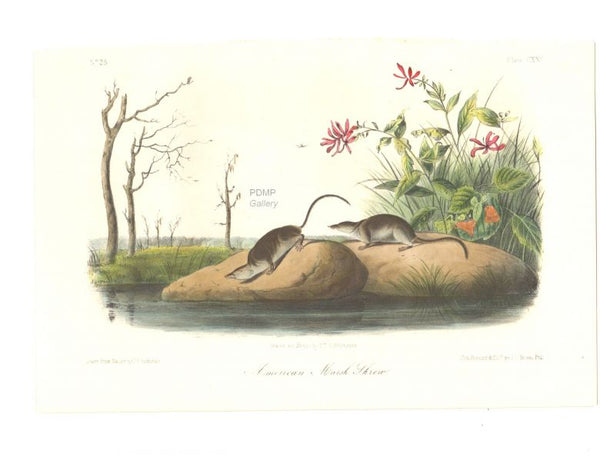Audubon March Shrew Puzzle