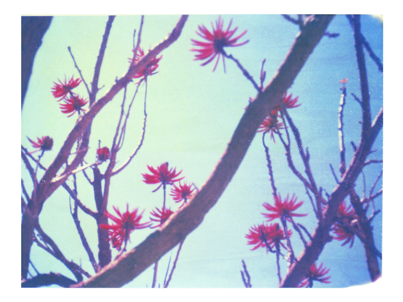"Blue, red and branches (California) • 8x10"" Print - She Hit Pause"