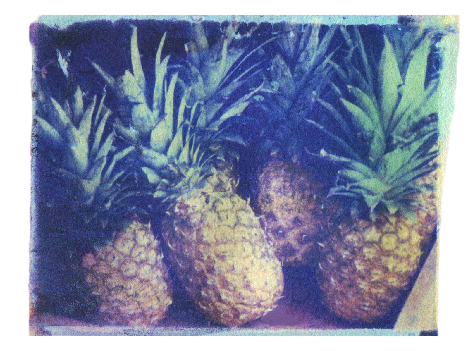 Pineapples - She Hit Pause