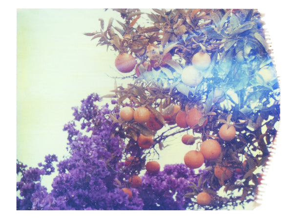 "Purples + Oranges • 8x10"" Print - She Hit Pause"