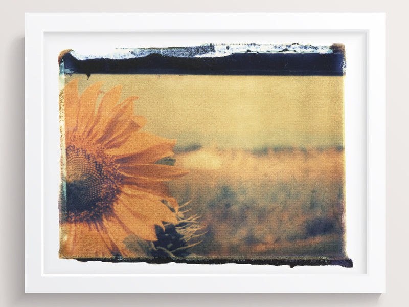 Sunflower On Film - She Hit Pause