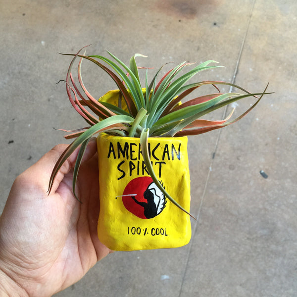 American Spirits Yellow - Planter