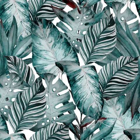 Monstera - PRE ORDER OPENS FROM WED 10st- 17th AUG
