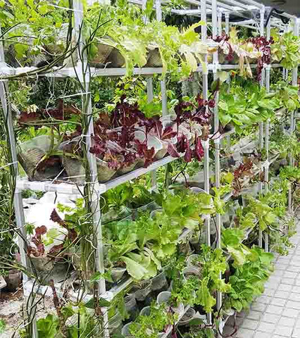Organic Veggie Wall (Frame & Pots Only)