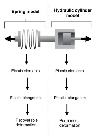 Viscoelastic properties of connective tissue.