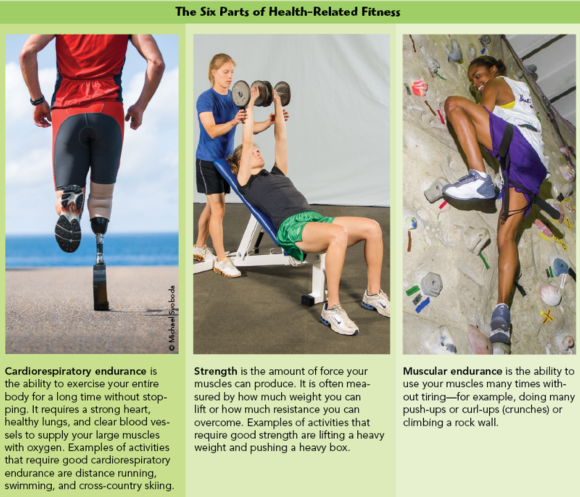Each Part Of Physical Fitness Is Described In More Detail The Two Following Features Six Parts Health Related And Five