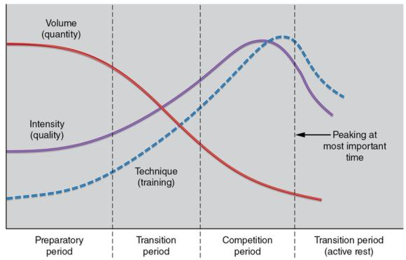 Figure 15.1 The model of linear periodisation.
