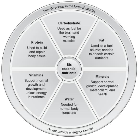 Figure 2.1 The six essential nutrients.