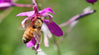 Ode to the Honeybee! A Big Celebration for One of the Planet's Smallest Creatures