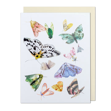 Butterflies and Moths Greeting Card