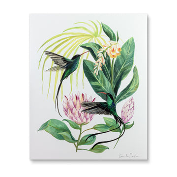 Emilie Simpson - Red-billed Streamertailed Hummingbirds Art Print