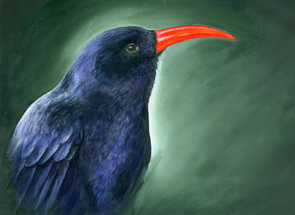 Chough portrait Signed print 8 x 6 inches