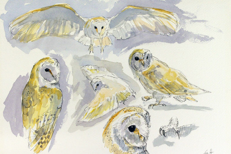 Barn Owl. Original Watercolour.  12 x 8 ins
