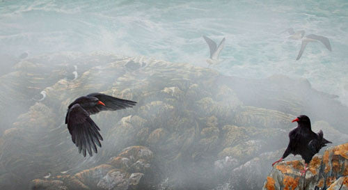 limited_edition_print_choughs_Lizard_cornwall